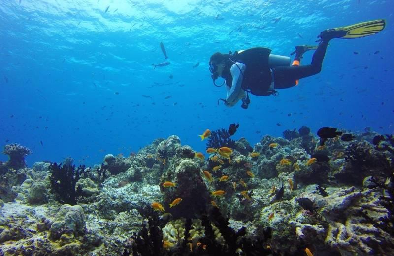 731fde7b1 Potápanie a šnorchlovanie - Maurícius | Dubaj.sk