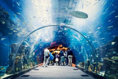 Dubai Aquarium & Water Zoo